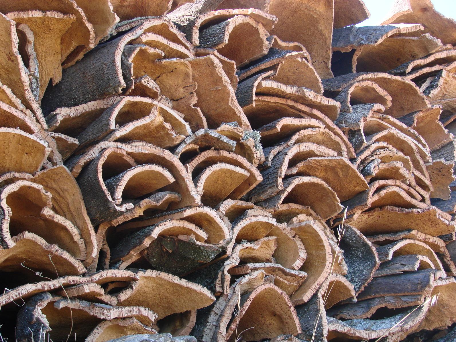 la d p che de kabylie archives du blog quel sort pour le li ge alg rien. Black Bedroom Furniture Sets. Home Design Ideas